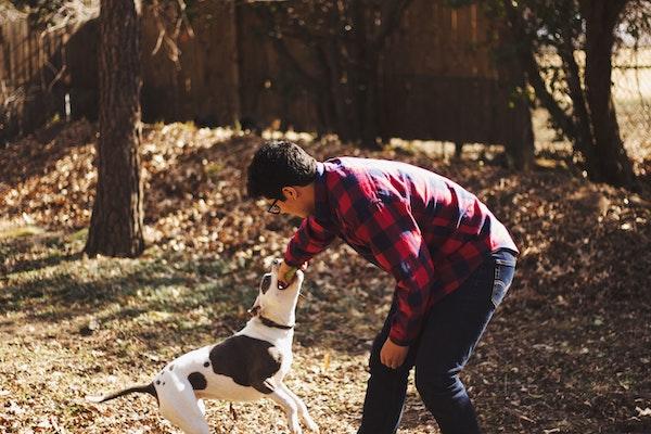 Hundehaftpflicht: Hund beißt Gast