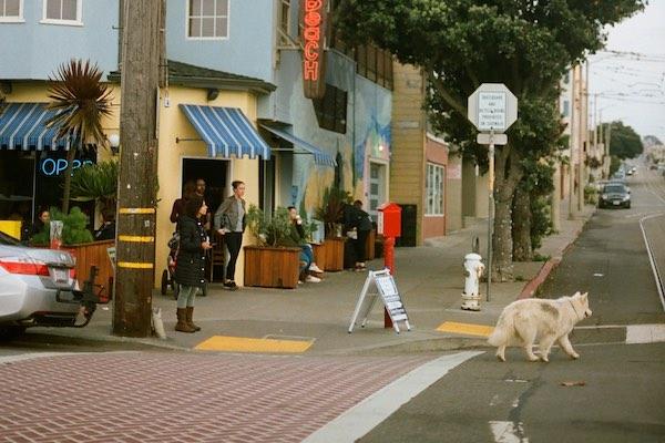 Hundehaftpflicht: Hund rennt auf die Straße