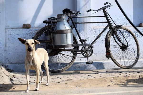 Hundehaftpflicht: Hund und Fahrrad