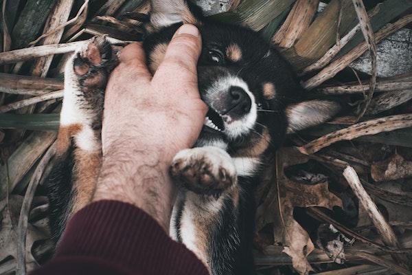 Hundehaftpflicht: Hund beißt besten Freund