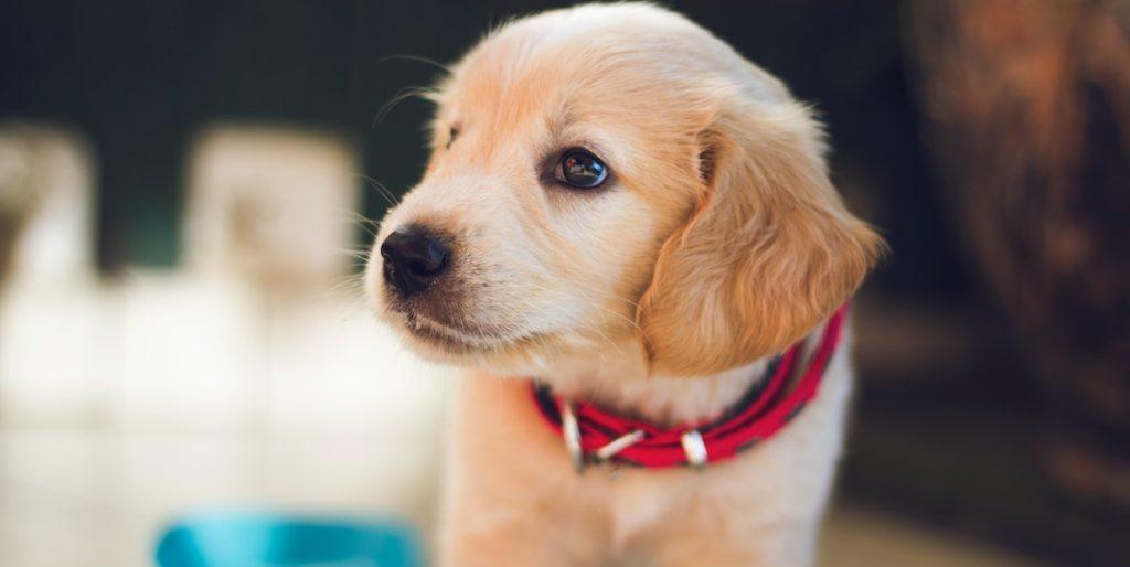 Hundeversicherung Welpe mitversichert