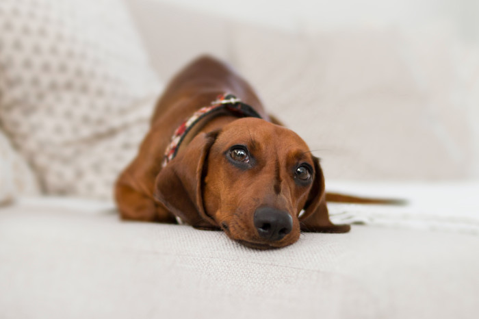 Hundekrankenversicherung Zusatzleistungen