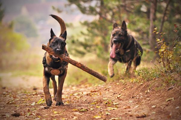 Hundekrankenversicherung: Hunde im Freien