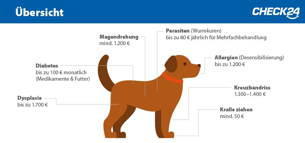 Hundekrankheiten und Kosten