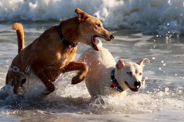 Hundehaftpflichtversicherung für Hundehalter