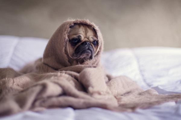 Hundekrankenversicherung im Vergleich